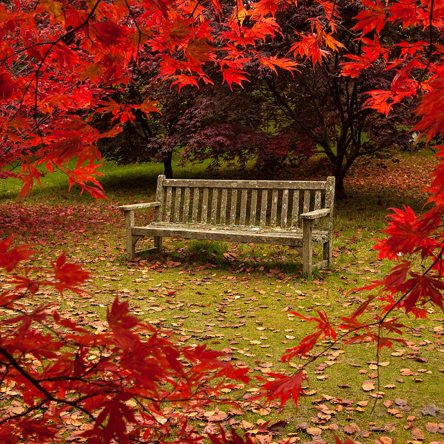 When Autumn Arrives In Your Garden Call A Cleaner